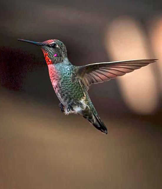 Magic Hummingbird